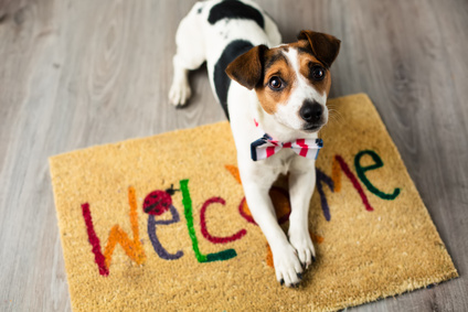 Considering Taking on Tenants with Pets? What you Need to Know.